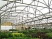 Autor: Núria Bargués Coma, Títol: Plantes en un hàbitat matemàtic